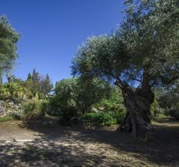 Lama-degli-ulivi-gallery-10