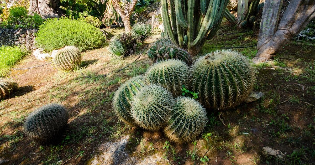Calendario Trattamenti Olivo Puglia.Lama Degli Ulivi Giardino Botanico Lama Degli Ulivi