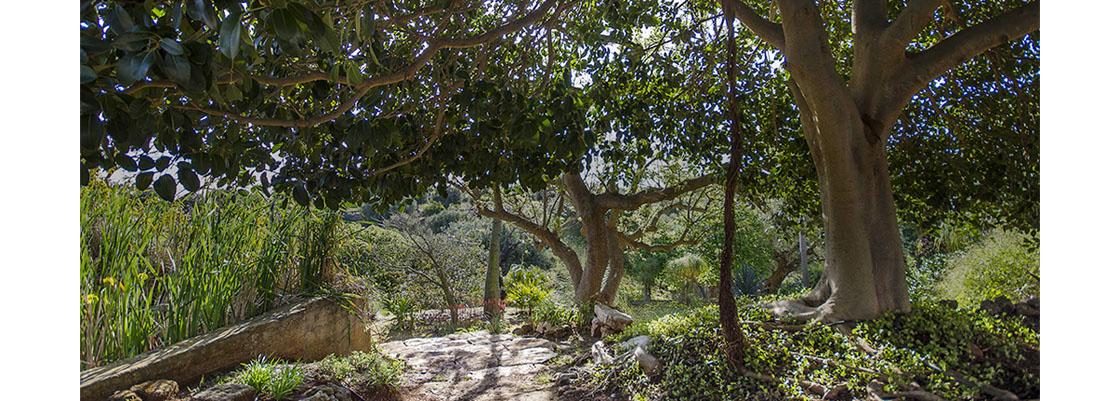 giardino-lamadegliulivi